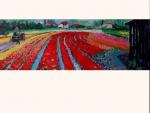 bloembollenveld-bij-de-zilk-150x50-olie-op-doek